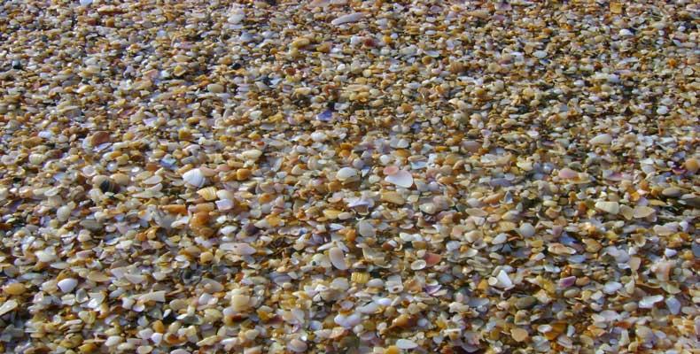 Ракушечник на Золотом пляже Крыма в Феодосии - Фото