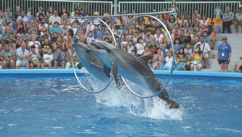 Алушта, дельфинарий - Фото 05