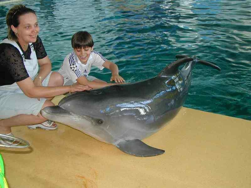 Отдых с детьми в дельфинарии - Фото 09