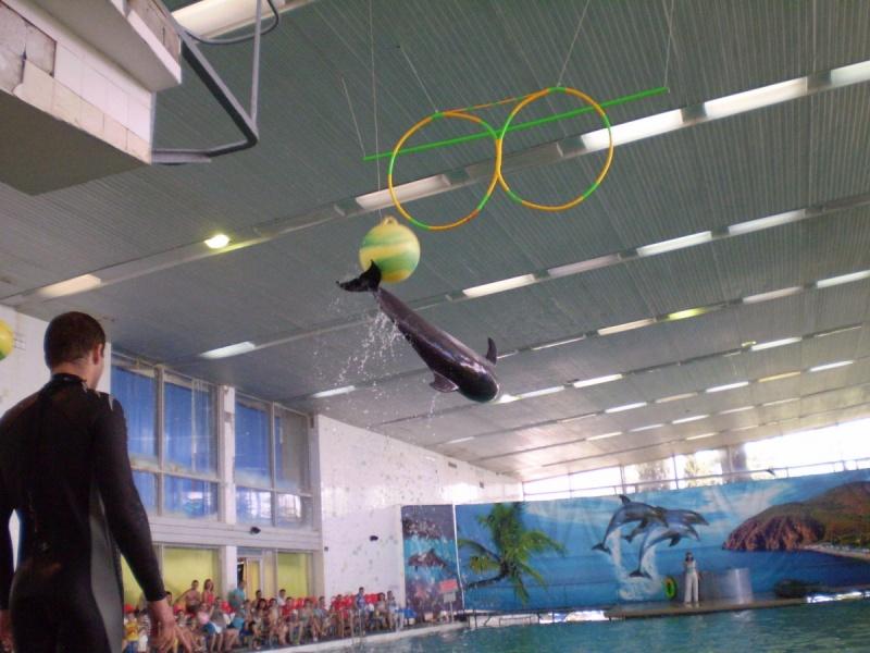 Разнообразные трюки и шоу-программы в дельфинарии - Фото 04