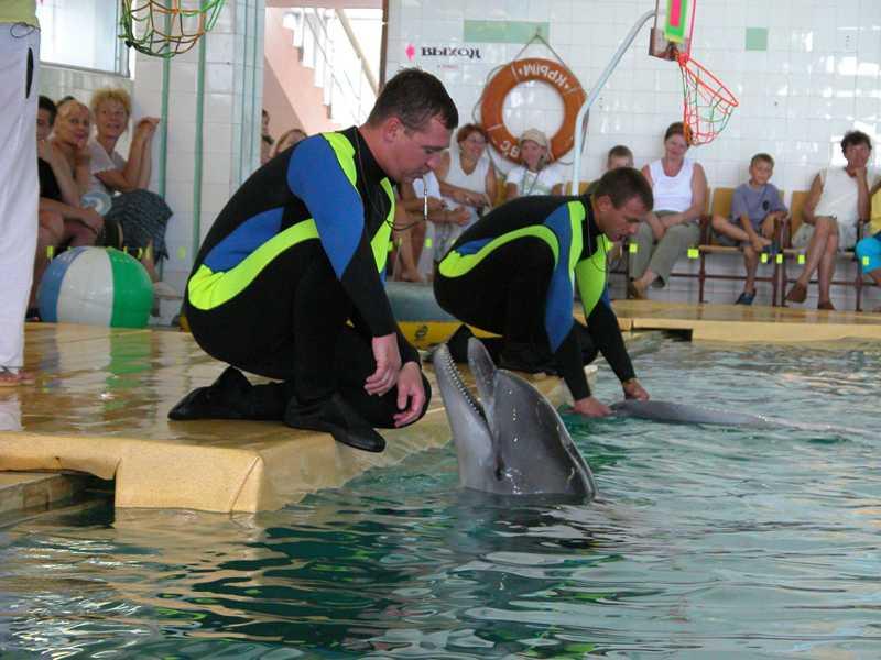 Дельфинарий, Партенит - Фото 03
