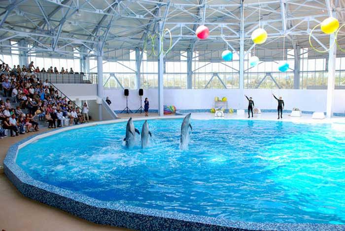 Дельфинарий в Евпатории. Отзыв