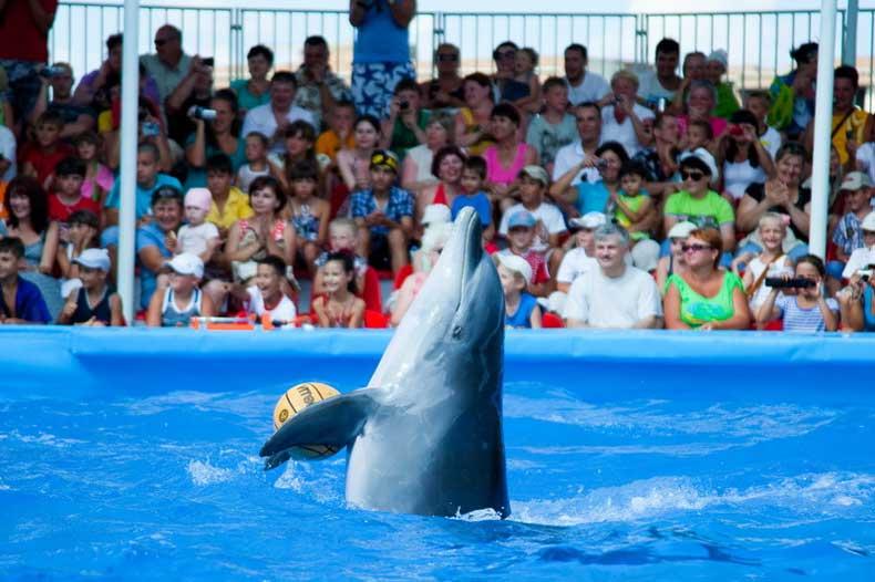 Феодосия, отдых с детьми: знаменитый дельфинарий с экзотической программой - Фото