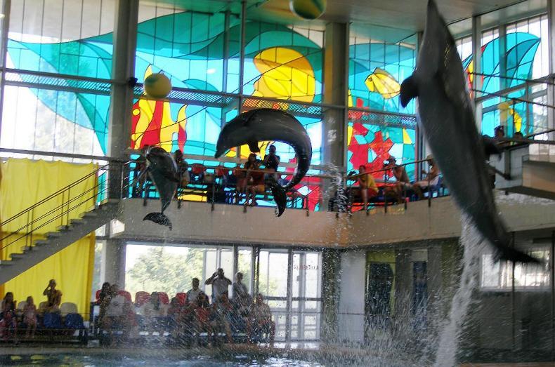Дельфинарий в санатории - Фото 04