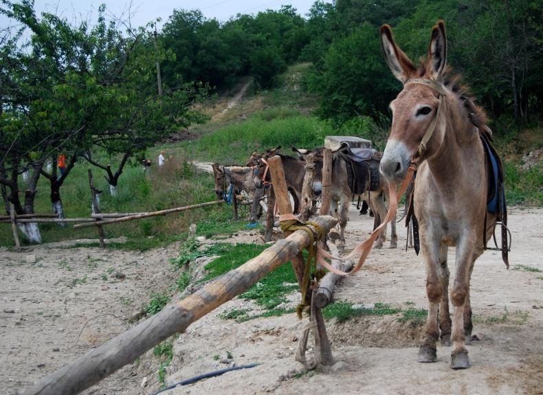 Ферма 'Чудо-ослик' - Фото 13