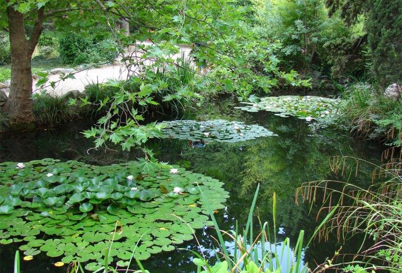 Лилии в форосском парке - Фото 09