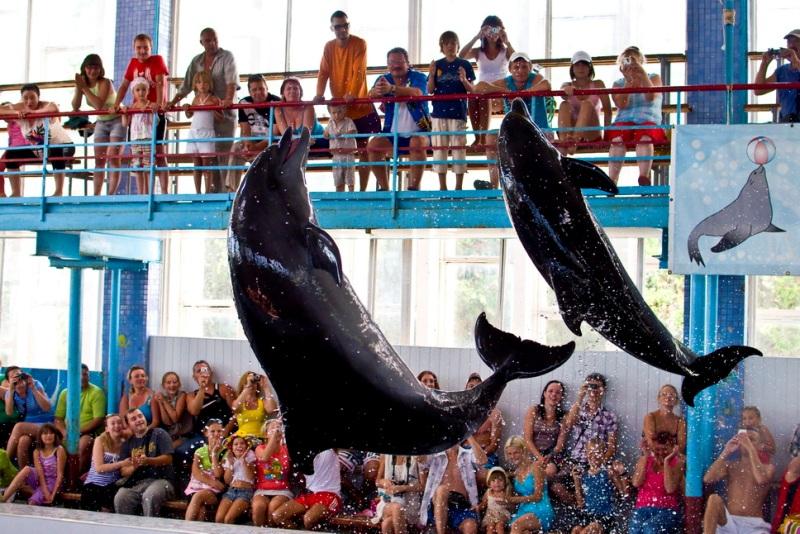 Разнообразные трюки и шоу-программы в дельфинарии - Фото 05